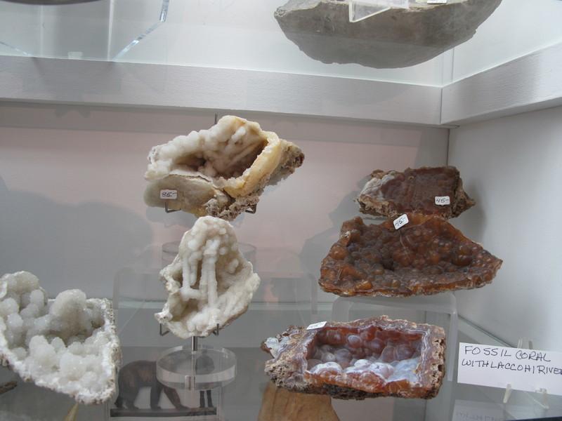Fossils | La Tierra Mineral Gallery | Taos, New Mexico