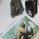 Giant sloth tooth.