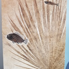 Palm Frond ond Fossil Fish